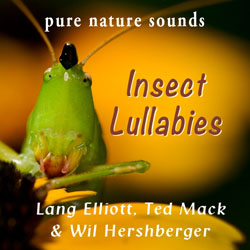 Insect Lullabies CD cover